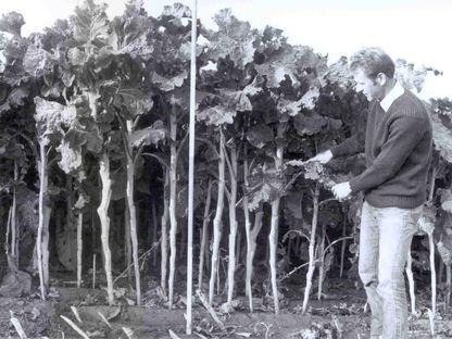1962: Paul Baecker becomes Head of Seed Cultivation